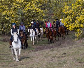 Burnelee Excursions on Horseback - Attractions Sydney